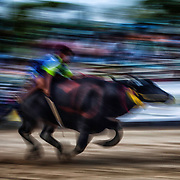 Water Buffalo Racing