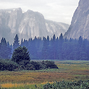 The meadow at Yosemite Valley.  Early in the morning - mist in the air.