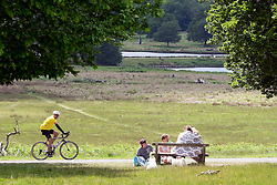 © Licensed to London News Pictures. 03/06/2015. Richmond, UK. People enjoy the hot weather.  Deer gather beneath trees in the shade in Richmond Park today 3rd June 2015. Temperatures are set to get highr as the week progresses. Photo credit : Stephen Simpson/LNP
