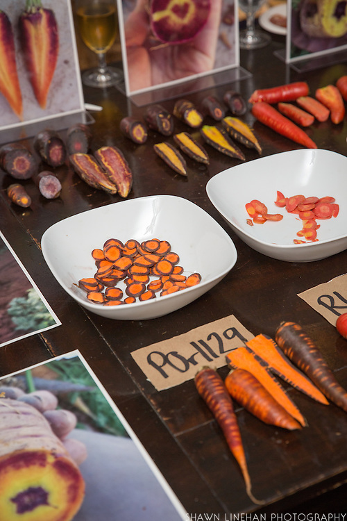 CARROT, Daucus carota Showcase: CIOA breeding lines<br />Breeders: Phil Simon, USDA-ARS and Laurie McKenzie, Organic Seed Alliance<br />Chef: Karl Holl, LetUmEat<br />Dish: Red carrot gnocchi, roasted carrot bolognese, carrot seed pan fritto, dried carrot top smoked parmigiano reggiano