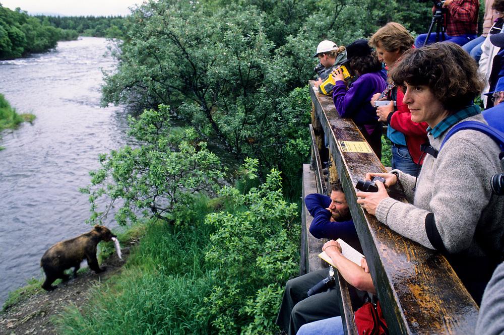 Alaska. Katmai NP. Brooks River . Tourists watch on as bears feed on salmon.
