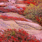 Autumn on Cadillac Mountain. Acadia National Park. Mount Desert Island. Maine