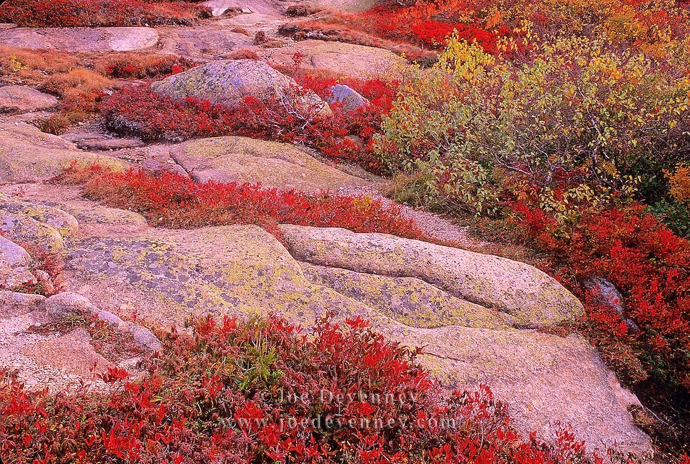 Autumn on Cadillac Mountain. Acadia National Park. Mount Desert Island. Maine