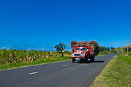 A truck trundles past loaded up with sugar cane, on the way to the sugar factory. Fiji