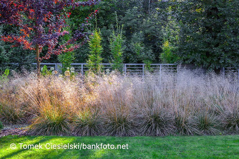 Autumnale border with ornamental grass `Deschampsia caespitosa`. Design: Malgorzata Helman