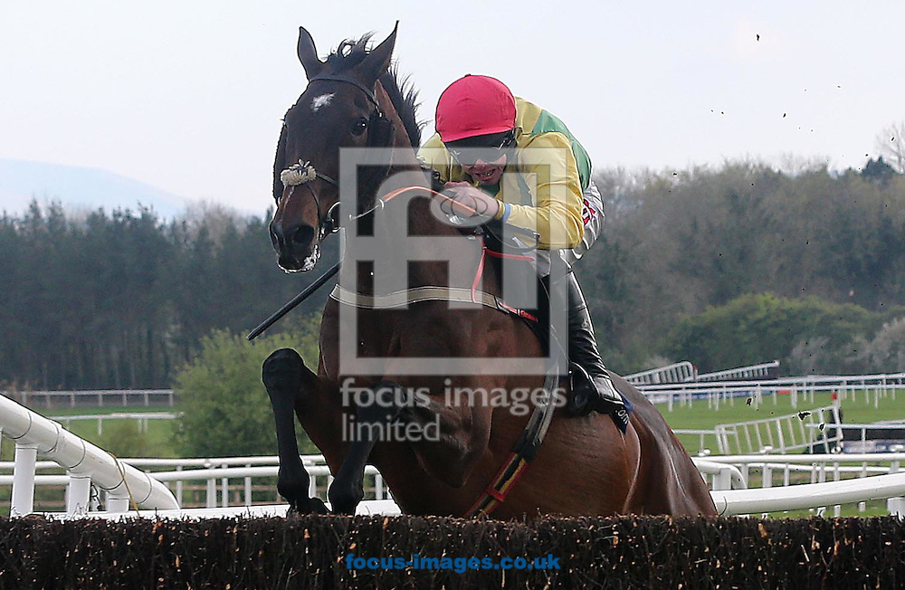 Andrew Lynch on Sizing Europe lands in front to win the Boylesports.com Champion 'chase at Punchestown Festival at Punchestown Racecourse, Co.Kildare<br /> Picture by Lorraine O'Sullivan/Focus Images Ltd +353 872341584<br /> 29/04/2014