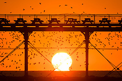 © London News Pictures. 07/01/2018. Aberystwyth, UK.   As the sun sets over the waters of Cardigan bay on a  cold but clear evening in Aberystwyth Wales, huge flocks of starlings return from their feeding grounds and fill the sky, performing balletic murmurations before descending to roost underneath the town's distinctive seaside pier. Photo credit: Keith Morris/LNP