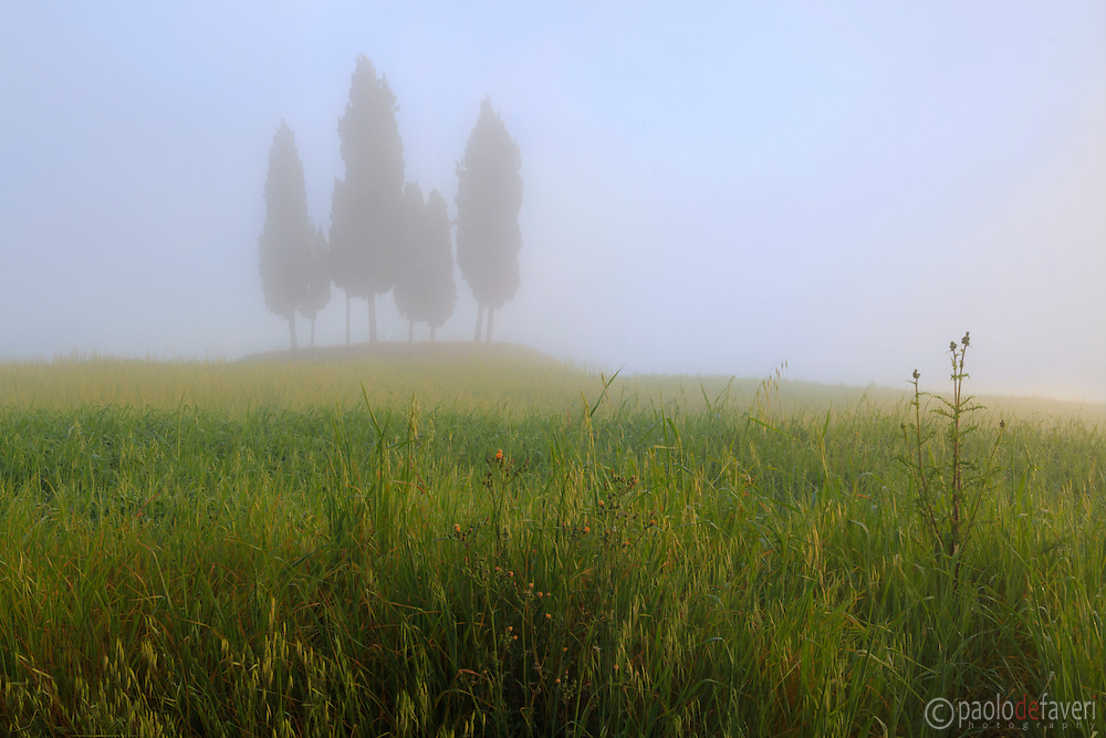 A bunch of cypress trees atop a hill in Orcia Valley not far from San Quirico d'Orcia, Tuscany, Italy. Taken on a very foggy morning at the end of April, moments after sunrise