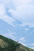 Alaska. Denali NP. Teklanika Glacier. Backcountry hiker on high tundra slope.