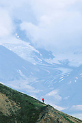 Alaska. Denali NP. Teklanika Glacier. Backcountry hiker on high tundra slope.