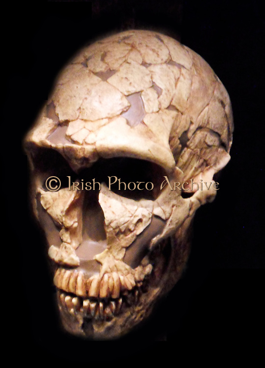 Early hominid skull