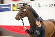 Anna Guseynova - Delano<br /> CDI Zeeland Outdoor 2017<br /> © DigiShots