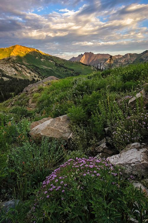 The sun slowly rises illuminating the mountain peaks in Utah's Little Cottonwood Canyon on a warm Summer morning.