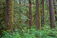 OREGON - Cascades - Northern