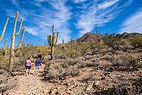 Saguaro cactus and hikers in the McDowell Sonoran Preserve gateway Trail, Scottsdale, Arizona, USA.