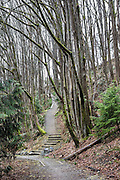 A path ascends beneath tall trees in winter, Ravenna Park, Seattle, Washington, USA. Cowen and Ravenna Park were formed when melt-off from the Vashon Glacial Ice Sheet formed Lake Russell and cut drainage ravines through new glacial fill. Lake Russell disappeared when the Ice Sheet retreated north of the Straits of Juan de Fuca, but various features remained, including the Green Lake drainage basin, which continued to empty through the Ravenna ravine into Lake Washington. The deeper pockets of the basin became Bitter, Haller and Green Lakes. Many creeks and brooks and springs fed into Green Lake, whose outlet was on the east side of the route of Ravenna Boulevard, in a deepening ravine which became Cowen and Ravenna parks.