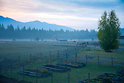 Early morning mist on the farm looking towards the Swan Mountains