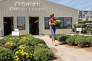 Gail Kennedy of Cedar Rapids picks out some mums at Frontier Garden Center, 1941 Blairs Ferry Road NE, in Cedar Rapids, on Thursday, September 8, 2011.