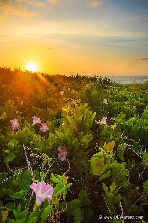 Sunrise and morning glory's on the Outer Banks.