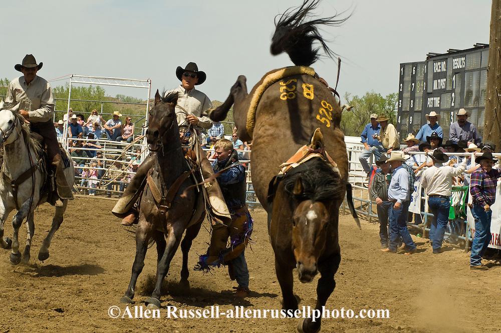 Pickup men Jay Shaw and Kyle Shaw help bareback bronc rider, Miles City Bucking Horse Sale, Montana