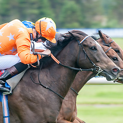 Ayr Racing | Ayr Racecourse | 21 June 2014