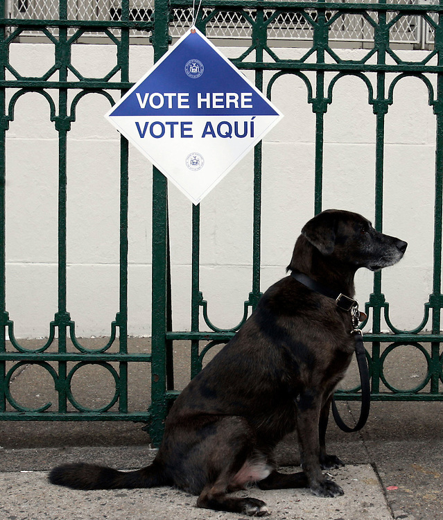 A dog waits for his owner outside a polling center for the the US General Election in the Park Slope section of the Brooklyn borough of New York City, Tuesday  02 November 2004. EPA/ANDREW GOMBERT