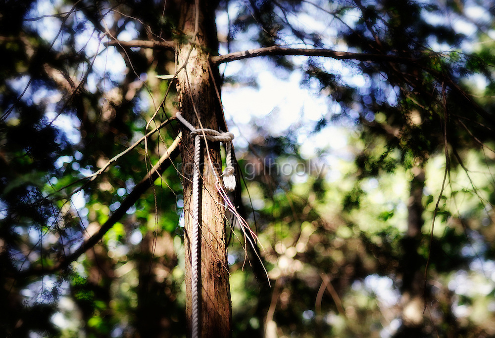 A noose is tied to a tree in Aokigahara Jukai, better known as the Mt. Fuji suicide forest, which is located at the base of Japan's famed mountain west of Tokyo, Japan.