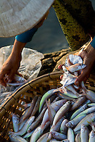 Woman sorting through fish in baskets at Hoi An's early morning fish market.