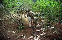 Kogi Indian boys run through the village coca field in the Sierra Nevada Mountains, on Colombia?s Caribbean coast in 2004. The Indians in the Sierra Nevada grow and chew coca as part of their culture and tradition. (Photo/Scott Dalton)