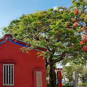 Flame Tree and Confucius Temple, Tainan City, Taiwan