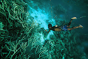 Spearfishing, Diver, Kitava Island, Trobiand Islands, Papua New Guinea