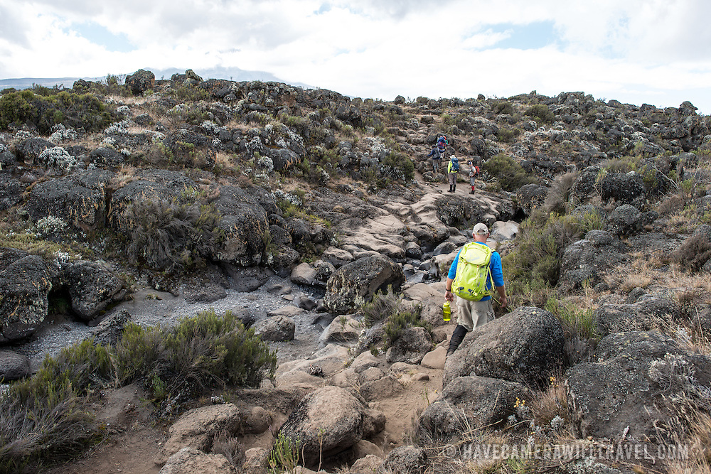 Hikers navigate the rocky terrain of the heath zone of Mt Kilimanjaro's Lemosho Route.