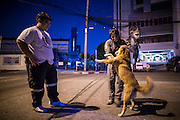 "30 NOVEMBER 2012 - BANGKOK, THAILAND:  Medics with the Ruamkatanyu Foundation play with a street dog between calls near the Ekamai BTS stop during a Friday night shift. The Ruamkatanyu Foundation was started more than 60 years ago as a charitable organisation that collected the dead and transported them to the nearest facility. Crews sometimes found that the person they had been called to collect wasn't dead, and they were called upon to provide emergency medical care. That's how the foundation medical and rescue service was started. The foundation has 7,000 volunteers nationwide and along with the larger Poh Teck Tung Foundation, is one of the two largest rescue services in the country. The volunteer crews were once dubbed Bangkok's ""Body Snatchers"" but they do much more than that now.   PHOTO BY JACK KURTZ"