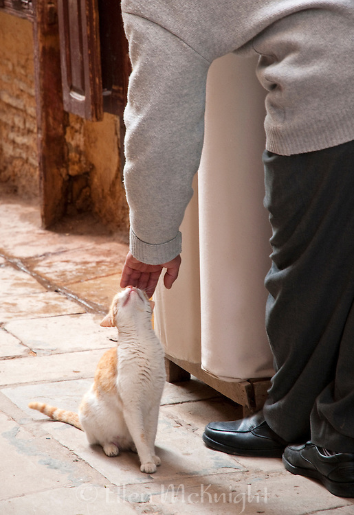Shopkeeper petting a cat in Fes, Morocco