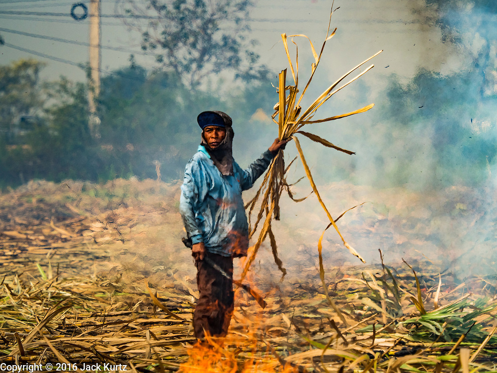 02 FEBRUARY 2016 - THUNG KHOK, SUBPAN BURI, THAILAND: A migrant farm worker from eastern Thailand burns out the chaff from sugar plants in a sugar cane field during the harvest in Suphan Buri province, in western Thailand. Thai sugar cane yields are expected to drop by about two percent for the 2015/2016 harvest because of below normal rainfall. The size of the crop is expected to increase slightly though because farmers planted more sugar cane acreage this year. Thailand is the second leading exporter of sugar in the world. Thai sugar growers are hoping a good crop would make up for shortages in global markets caused by lower harvests in Brazil and Australia, where sugar yields have been stunted by drought. Because of the drought in Thailand, sugar exports are expected to drop by up to 20 percent, contributing to a global sugar shortage. The drought is is also hurting the quality of Thai sugar, because sugarcane grown in drought is less sweet than normal so mills need to process more cane to make the same amount of sugar. Thai sugar farmers have lost 20 percent to 30 percent of their output this year because of the drought.        PHOTO BY JACK KURTZ