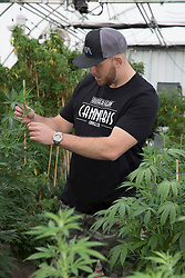 EXCLUSIVE: Meghan Markle's nephew Tyler Dooley is a Cannabis farmer who is planning a new drug called Markle's Sparkle. 25 year old Tyler is too busy growing Millions of Dollars worth of the sticky icky at his greenhouse in Oregon to worry about the upcoming big day. 16 Apr 2018 Pictured: Tyler Dooley. Photo credit: MEGA TheMegaAgency.com +1 888 505 6342