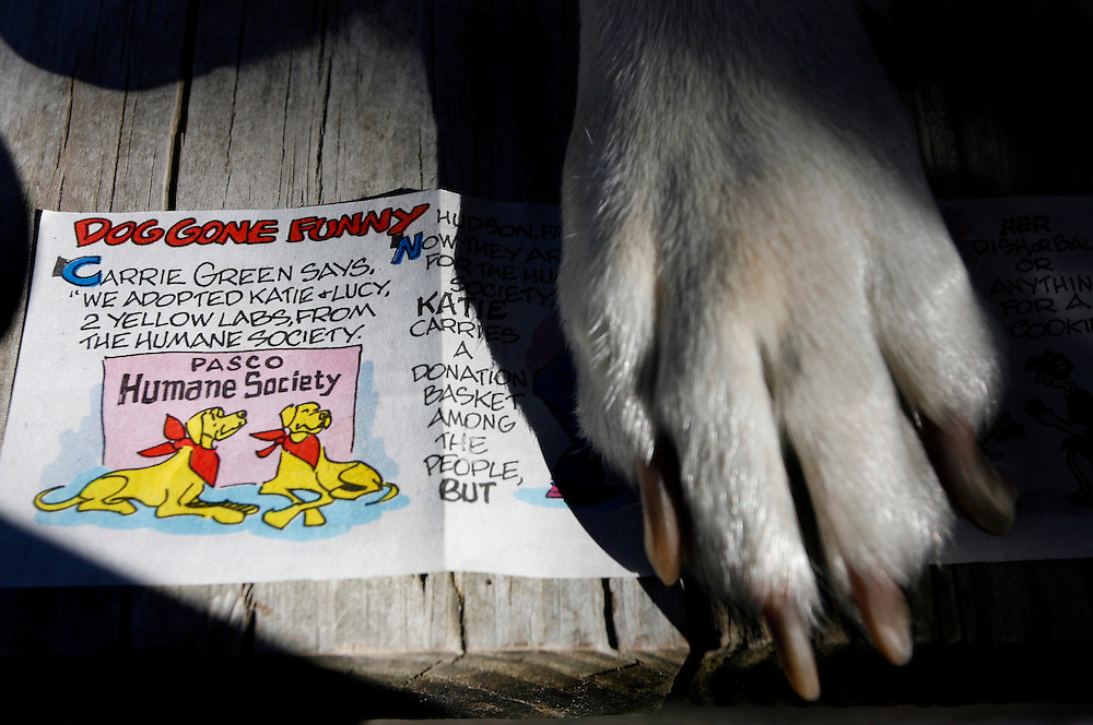 Lucy, left, and Katie, are two 5-year-old yellow Lab mixes who were featured in Sunday's Marmaduke comic strip. Artist Brad Anderson devotes space each week to real dogs submitted by fans. Katie and Lucy's owner, Carrie Green, submitted a letter and photo during the summer. Here, Katie's paw is visible on her feature comic strip..BRENDAN FITTERER | Times