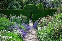 Nepeta, astrantia and iris in The Old Garden at Hidcote Manor. View through yew hedge arches to blue seat. Taxus baccata