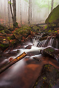 River in misty forest at spring