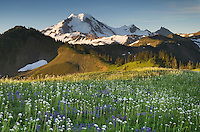Mount Baker, seen from wildflower meadows on Skyline Divide, Mount Baker Wilderness Washington