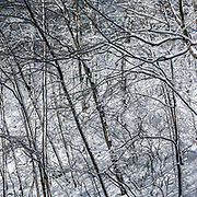 Cold Spring roadside. Nature's calligraphy.