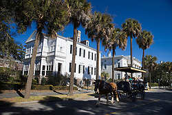 Horse pulls a carriage tour group in front of Palmetto trees lining South Battery Street with large mansions, Charleston, South Carolina, United States of America.