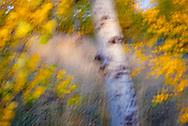 Camera motion during exposure mimics the look of an impressionist painting.