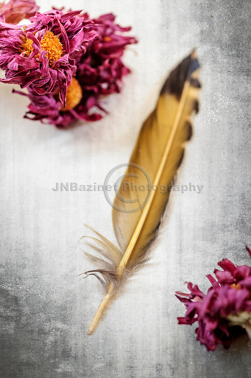 A quill made of gold finch feather set against rustic background with dried flowers for mood