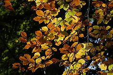 Autumn leaves, herfstbladeren