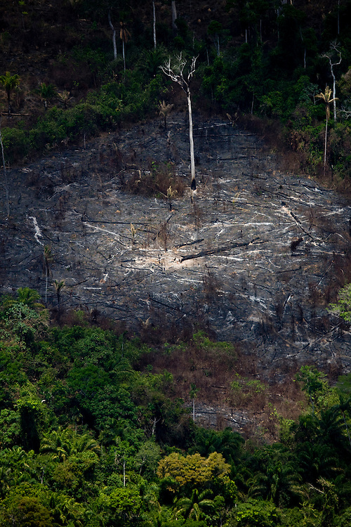 A portion of the Amazon rainforest which has been partially cleared for cattle or crop farming in Sao Felix Do Xingu municipality, in Para State, Brazil, August 13, 2008..Daniel Beltra/Greenpeace
