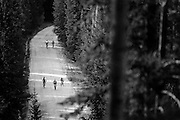 SHOT 8/19/11 9:22:57 AM - A group of racers climb a long hill on Boreas Pass Road during the final day of racing in The Breck Epic in Breckenridge, Co. The event is a 6-day ultra-endurance mountain bike stage race held in the sprawling backcountry surrounding the town of Breckenridge, Co. The course is 240 miles and features a combined 38,000 feet of climbing, 90% of which is above 10,000 feet. More than 200 riders from 15 different countries participated in the race. (Photo by Marc Piscotty / © 2011)