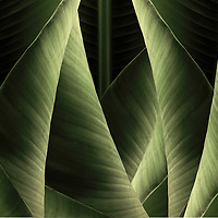 Banana Leafs. These pieces are all created in Hawaii from Hawaiian plants.