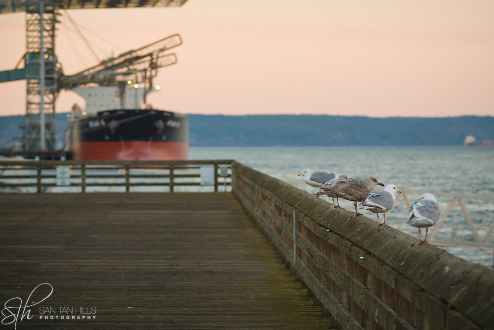Seagulls on boardwalk with ship in background - Tacoma, WA