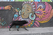 A street dog walks past colorful graffiti adorning a wall in Cerro Alegre, Valparaiso.